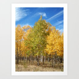Mountain Aspen Art Print