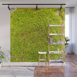 Moss, Nature Trails for Life Wall Mural