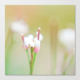 Tiny Dancer (1) Canvas Print