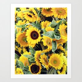 Happy Sunflowers Art Print