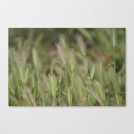Wild Grass in Sage and Pink Lemonade Canvas Print