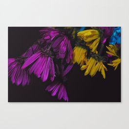 Withered Daisies Canvas Print