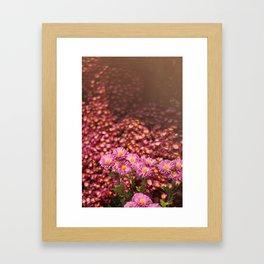 Colorful Pink Flowers Framed Art Print
