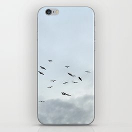 Pelicans iPhone Skin