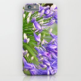 Agapanthus (African Lily) iPhone Case