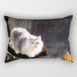 The Beautiful Maine Coon Dilute Calico Rectangular Pillow