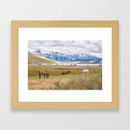 Torres del Paine - Wild Horses Framed Art Print