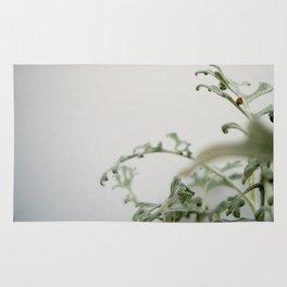 white series (1) Rug