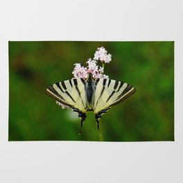 Scarce Swallowtail On Wild Garlic Flowers Rug