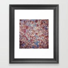 Blossom Series 2 Framed Art Print