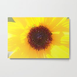 Yellow Like the Sun -  Sunflower Center by Reay of Light Metal Print