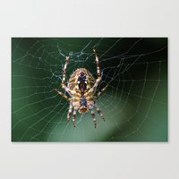spider Canvas Prints featuring Spider by Dora Birgis