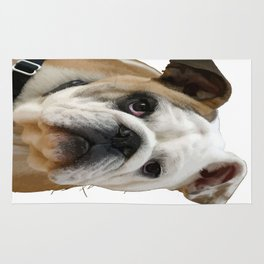 American Bulldog Background Removed Rug
