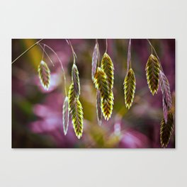 Inland sea oats (Chasmanthium latifolium), pt2 Canvas Print