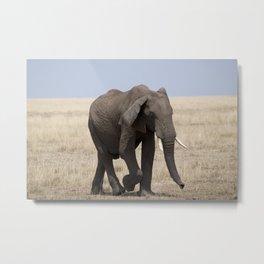 Mara Elephant Metal Print