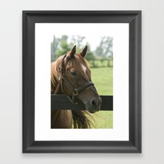 Creator - Old Friends Equine, Georgetown KY Framed Art Print