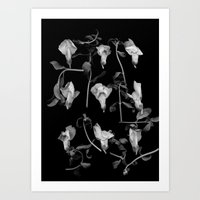 Curly Snapdragons in BW Art Print