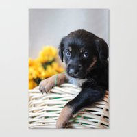 puppies Canvas Prints featuring Puppies by Photography By SidD