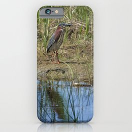 Green Heron on Water's Edge iPhone Case