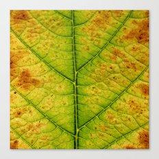 autumn leaf macro Canvas Print