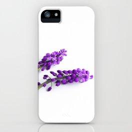 grape-hyacinth iPhone Case