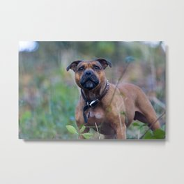 STAFFY DOG IN WOODLAND Metal Print