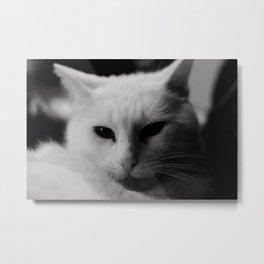 Generic Cat Picture Metal Print