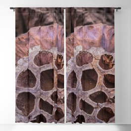 Dried lotus Blackout Curtain