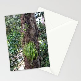 Epiphyte growth on tree in rainforest Stationery Cards