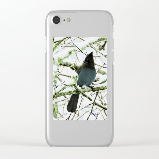 Steller's Jay in the Snow Clear iPhone Case
