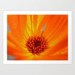 marigold macro Art Print