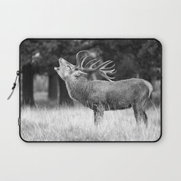 Bellow Laptop Sleeve
