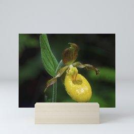 Lady Slipper 2 Mini Art Print