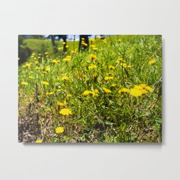 Yellow Flowers In The Green Grass Metal Print