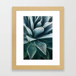 Agave Rain #1 Framed Art Print