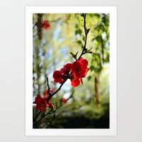 Bold Red Flower Art Print