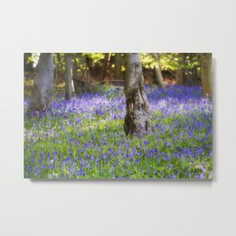 Bluebell Woodland Metal Print