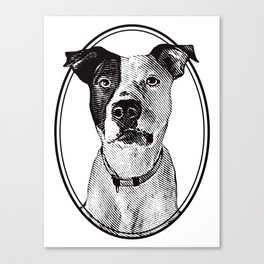 Pit Bull with oval frame Canvas Print