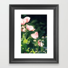Pink Poppies Framed Art Print