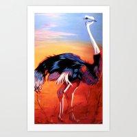 ostrich Art Prints featuring Ostrich by Vicki Lynn Rae