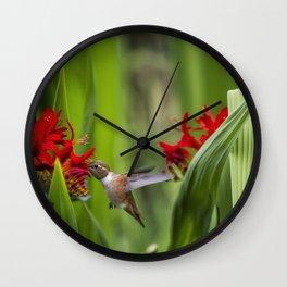 Rufous Hummingbird Feeding, No. 3 Wall Clock