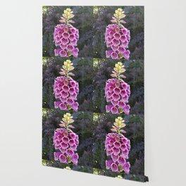 Gloves in summer!  Foxglove, Digitalis purpurea Wallpaper