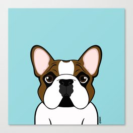 Frenchie - Fawn Pied Canvas Print