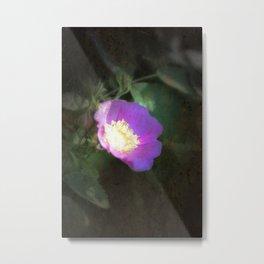 glowing old fashioned rose elegance Metal Print