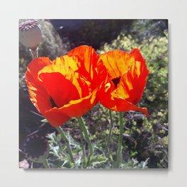Poppies, oil painting Metal Print