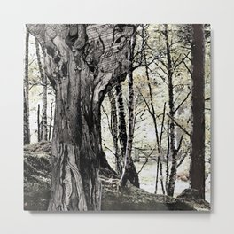 Trees have long thoughts, Metal Print