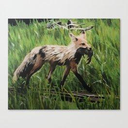 Yellowstone Fox Canvas Print