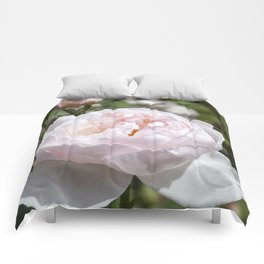 Pink Cabbage Rose Comforters