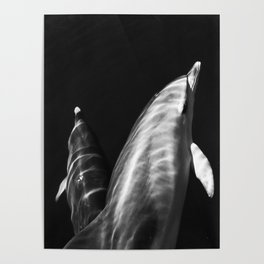 Black and white dolphins Poster