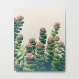 Pretty Little Succulents Metal Print